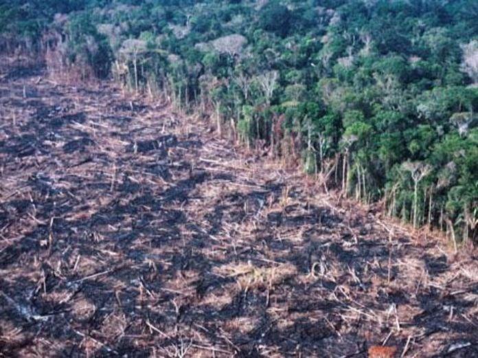 poziar dazdovy prales