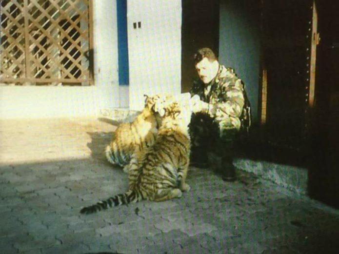 Mikuláš Černák a kŕmenie tigrov.