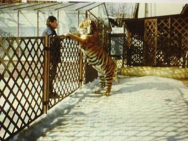 Mikuláš Černák a jeden z jeho slávnych tigrov.